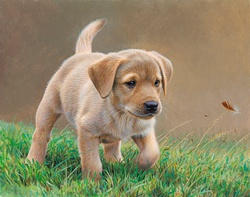 Yellow labrador puppy chasing feather in grass