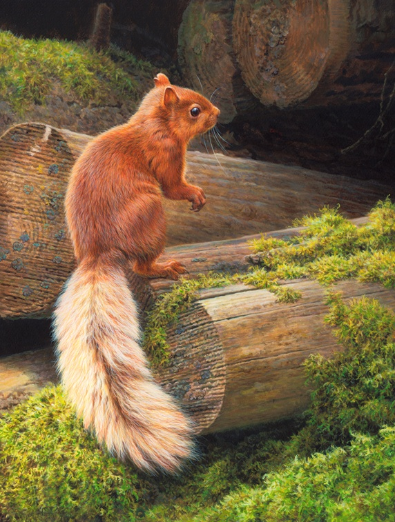 Red squirrel (Sciurus vulgaris) on tree trunk