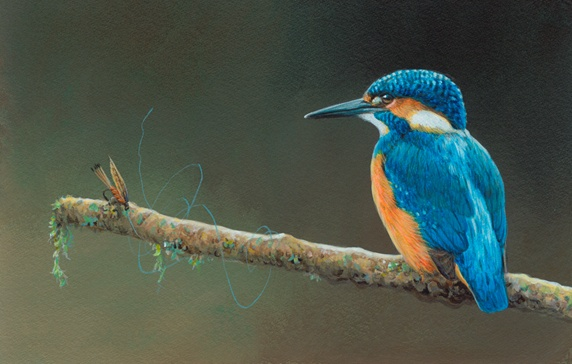 Kingfisher perching on branch with tangled fly fishing line and fishing hook
