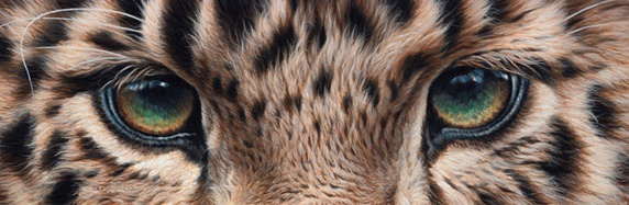 Cropped close up of eyes of leopard
