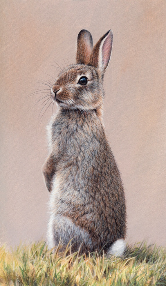 Alert rabbit sitting up on hind legs