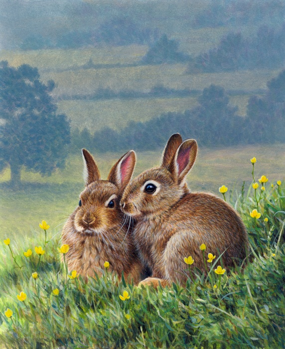 Two brown rabbits huddling together among buttercups in countryside