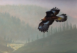 Golden eagle flying over misty valley