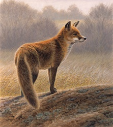 Fox in countryside in autumn