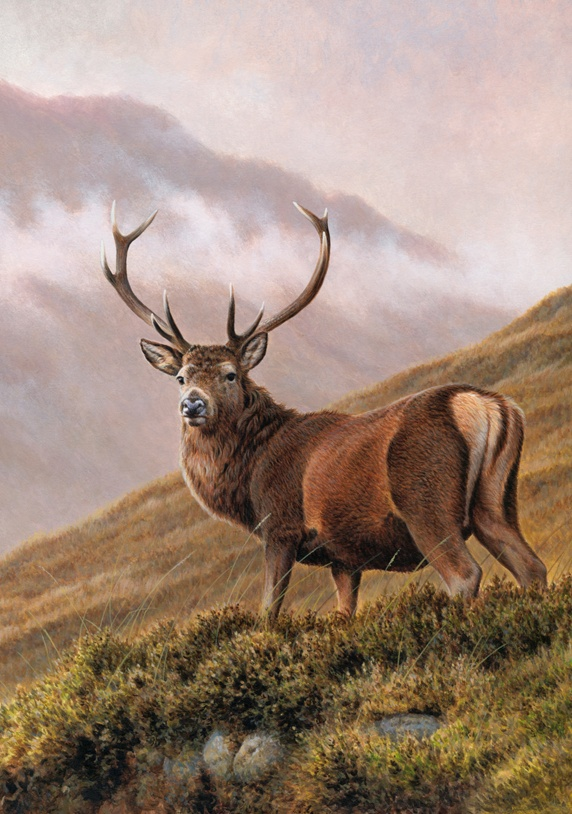 Red deer stag in upland landscape