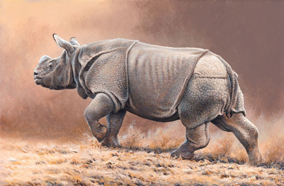 Rhino walking on grass