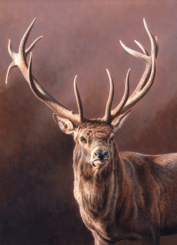 Portrait of stag