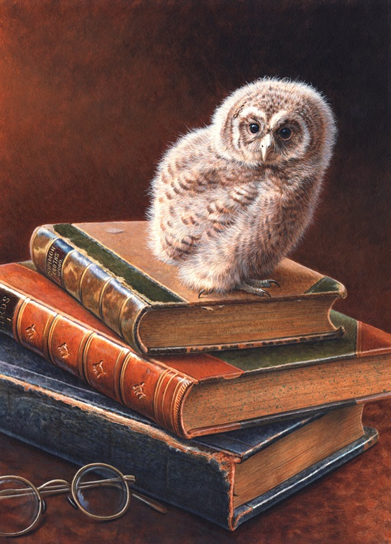 Tawny owl perching on stack of books