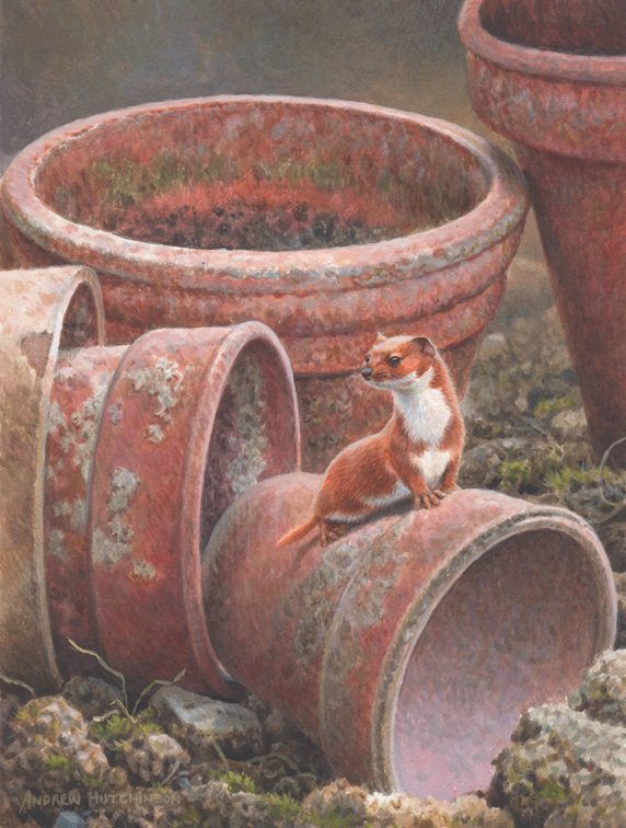 Weasel on empty flowerpot