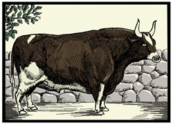 Bull against stone wall