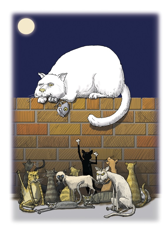 Skinny cats looking at fat cat lying on wall