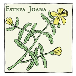Estepa Joana (Hypericum balearicum), plant with yellow flowers