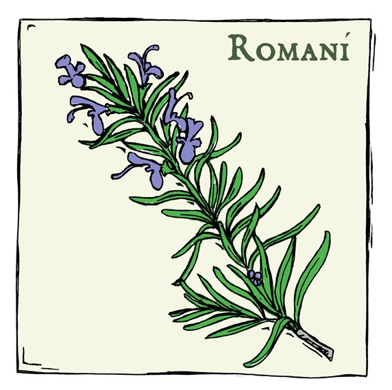 Romani, plant with purple flowers