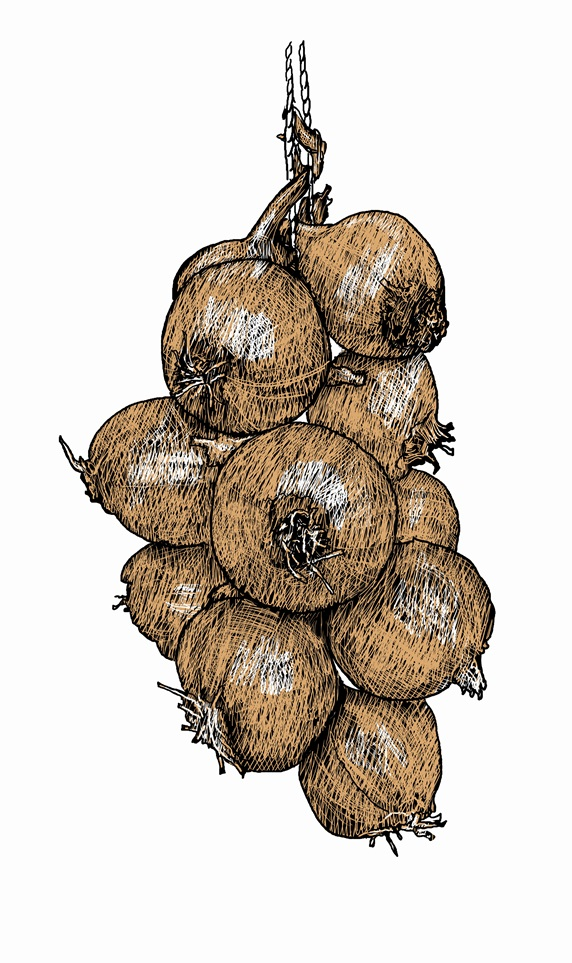 Illustration of string of onions