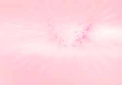 Abstract pink backgrounds of dandelion clock