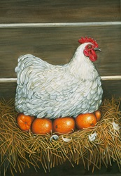 Hen in nest sitting on oranges by Bob Venables