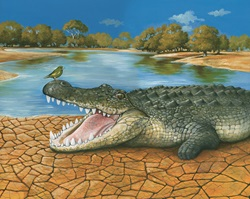 Bird sitting on crocodile's open mouth by Bob Venables