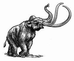 Black and white scraperboard engraving of woolly mammoth