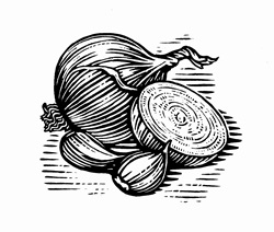 Black and white scraperboard engraving of onions and garlic