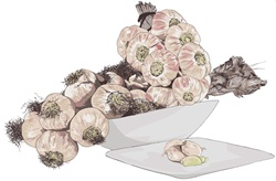 Beige garlic in bowl and on plate, white background