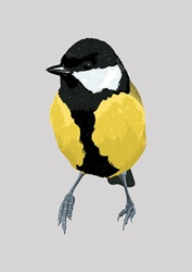 Chickadee bird, grey background