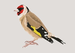 Multi colored bird, beige background