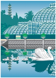 Swans in botanic garden, architecture in background