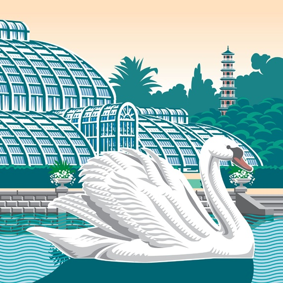 Swan on pond, glasshouse and botanic garden in background