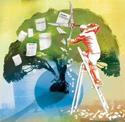 Man standing on ladder and cutting invoices from tree