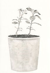 Small plant growing in flower pot, black and white