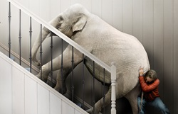Man struggling to push elephant up stairs