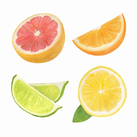 Watercolour painting of slices of citrus fruit