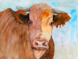 Watercolor close up of cow looking at camera,