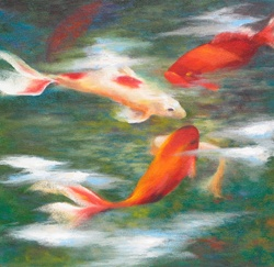 Koi carp goldfish swimming in pond
