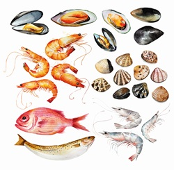 Watercolour painting of range of seafood
