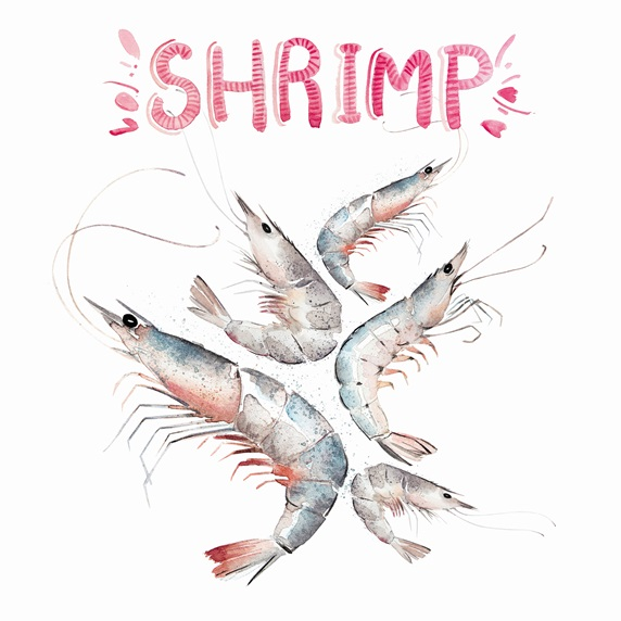 Watercolour painting of fresh shrimps