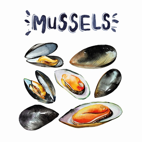 Watercolour painting of fresh mussels