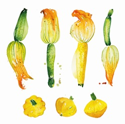 Watercolour painting of courgettes and patty pan squash