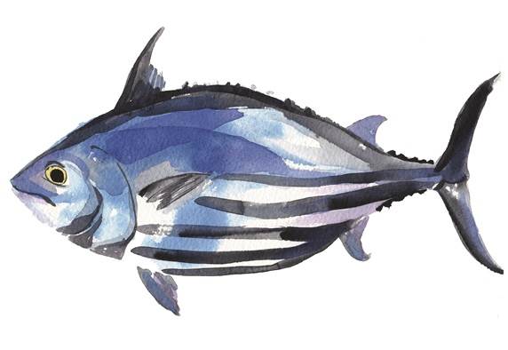 Side view of blue fish on white background