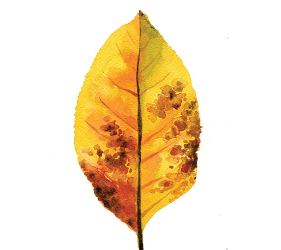 Yellow leaf with brown spots on white background