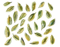 Green seeds on white background
