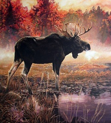 Elk in swamp
