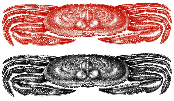 Red and black crabs on white