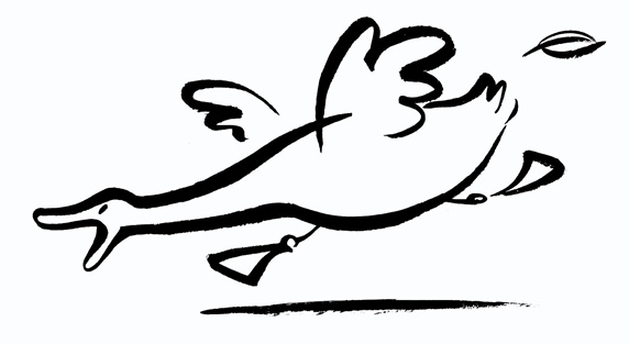 Side view of running duck