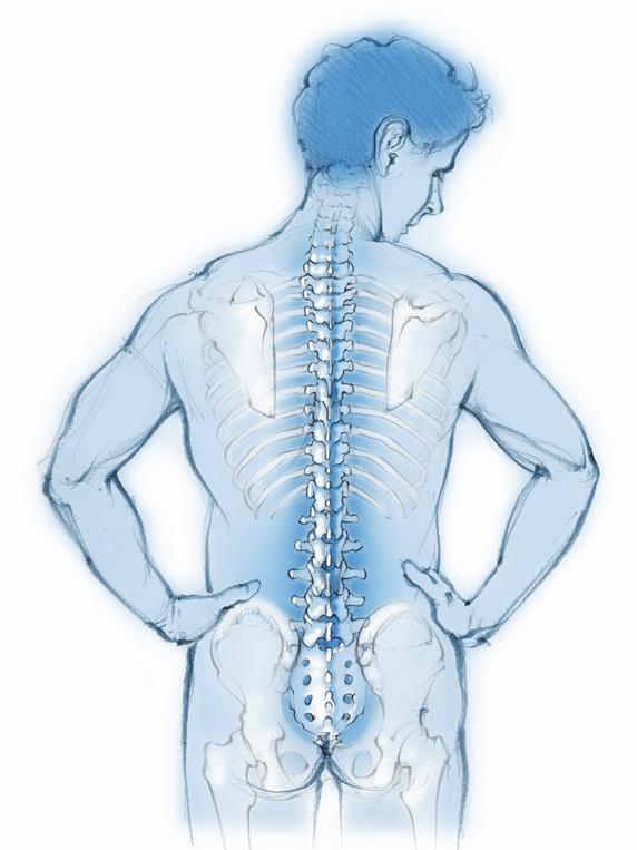 Spine And Back Bones In Transparent Man Stock Images