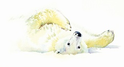 Polar bear laying in snow