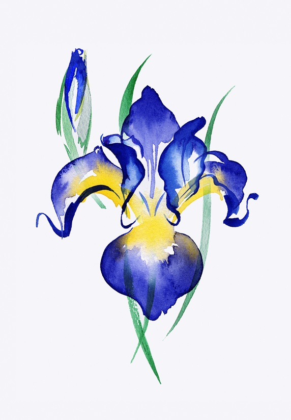 Watercolour painting of blue irises