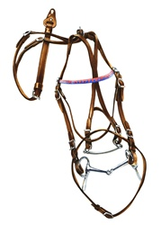 Bridle on white background