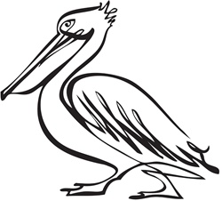 Side view of pelican