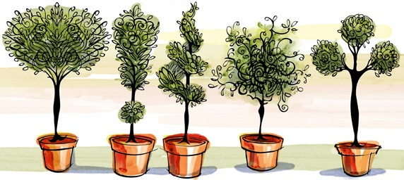 Five potted plants